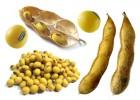 Куплю некондицію (відходи) сої дорого