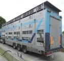 Полуприцепы, прицепы и автомобили для перевозки скота, свиней, птицы