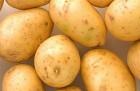 КУПЛЮ товарный картофель от 20 тонн