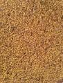 Семена люцерны ( Немагниченая)