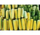 Продам насіння кукурудзи ВН-63