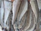 Продам рыбу оптом - Хек тушку