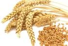 Куплю пшеницю 3, 4, 5, 6 клас від 300т