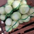 Продаем капусту белокачанную оптом