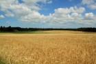 Продам домен Farmland.com.ua (Земля сельскохозяйственного назначения)
