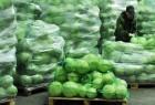Продам капусту белокачанную и пекинскую от 5 тонн.