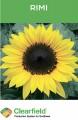 Семена подсолнечника Rimi, производитель Евросем