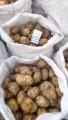 продам молоду картоплю рівєра