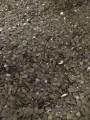 Продаж гарбузового голозерного насіння