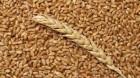 уплю пшеницу - ѕревью изображени¤ 1