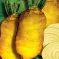 Продам семена свеклы кормовой в ассортименте оптом и в розницу