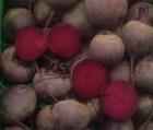 Продам семена свеклы (буряка) столовой красной в ассортименте