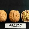 Саженцы ореха Фернор