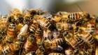Привезем пчелопакеты!!! (Винница, Умань, Кировоград, Кривой Рог)