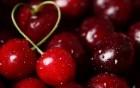 Покупка вишни на переработку оптом