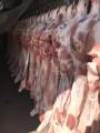 Свинина в полу тушах