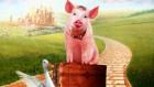 Продам кормовой фарш для свиней, уток
