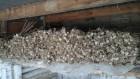 Воздушные семена сорта Любаша