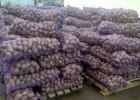 Куплю картофель очень много!