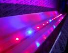 LED освещение теплиц