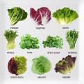Продам зелень и салаты и мяту