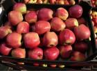 яблоки оптом от производител¤