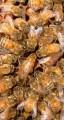 ѕродам пчеломаток, маток италь¤нской породы