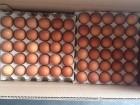 экспорт яйца куриного јзи¤ ≈вропа