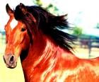 Закупаем лошадей