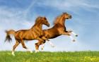 Премикс для Лошадей Коней