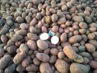 Картофель оптом от 20т