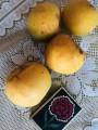 Продам домашние абрикосы