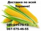 Семена гибридов кукурузы на зерно и силос насіння кукурудзи