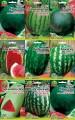 Насіння Кавунів - пакет Гігант  оптом семена Арбузов