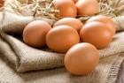 Продаем яйца свежие С0, С1 и яичный порошок на экспорт - Превью изображения 1