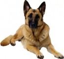 """Корм для собак в Одессе  - Каша быстрого приготовления «7 злаков»"""""""