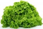 Продам в больших количествах Зелень для салатов