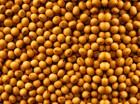 Продам семена сои ГМО, устойчивая к Раундапу