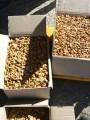 Грецкий орех чищеный Бабочка
