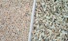Купуємо зерно вівса, кукурудзи, спельти, проса, гречки, ячменю