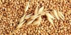 Куплю жито