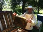 Продам свіжий травневий мед 2018 року