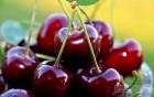 продам черешню с сада в Херсонской области
