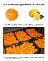 Поставка мандаринов из Грузии