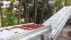 Конвейеры ленточные для сортировки ягод, а также для их сушки после мо