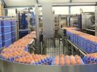 Система паллетирования яиц Eggs Cargo