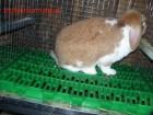 Продам пластиковые полы для кроликов