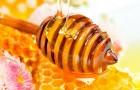 купим мёд от 300 кг.