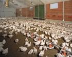 Несменяемая подстилка Нетто Пласт для животных, пробиотики. Акция !