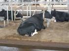 'ерментационна¤ подстилка и пробиотики дл¤ животных оптовые цены
